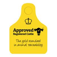 Approved Registered Cattle
